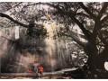 """""""光彩同路""""--南城、道滘、地税分会会员摄影作品联展 (52)"""